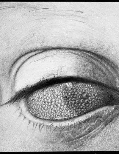 1983 Eugeniusz Józefowski, Oko wielokrotnie patrzące rysunek ołówkiem na papierze akwarelowym, format 60 cm x 60 cm 04