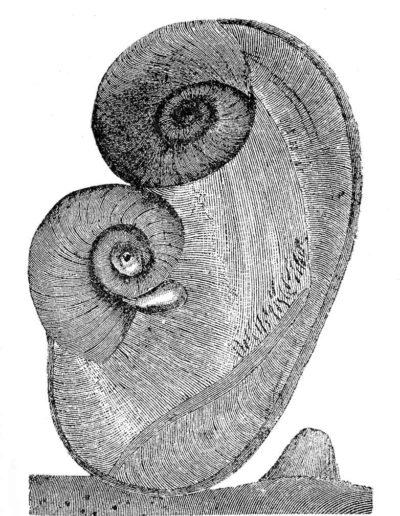 1987 Eugeniusz Józefowski, Małe formy z jakiegoś świata 01, 12 x 15 cm