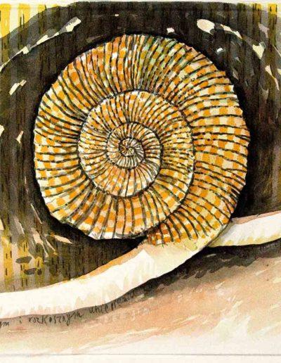 2009 Eugeniusz Józefowski, Amonit w rozkrocznym i rozkosznym uniesieniu,rysunek tuszem lawowanym na papierze czerpanym, 42 x 29,5 cm
